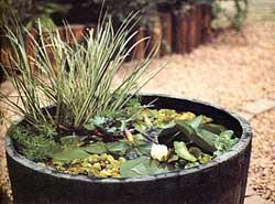 Rock Pond Garden Ideas Garden Guides Garden Design Plans