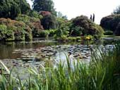 The lakeside is planted with rhododendrons