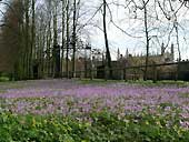 Crocuses & winter aconites - Cambridge