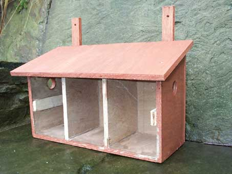 Build House Sparrow Nest Box   Home ContainerHow to build a bird box for house sparrows