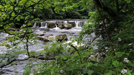 Aysgarth Upper Falls, Wensleydale - Yorkshire Dales (OS Grid Ref. SE012886 Nearest Post Code DL8 3SR)