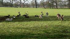 Burghley Deer Park - Stamford, Lincolnshire (OS Grid Ref. TF048063)