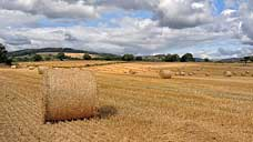 End of the harvest at Letton - Shropshire (OS Grid Ref. SO379705 Nearest Post Code SY7 0DS)