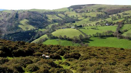 Llantysilio Mountain, Denbighshire (OS Grid Ref.  SJ148440 Nearest Post Code   LL21 9BN)