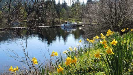 Springtime on the shore of Loch Oich, at Ardrishaig (OS Grid Ref. NN300993 Nearest Post Code PH35 4HP)
