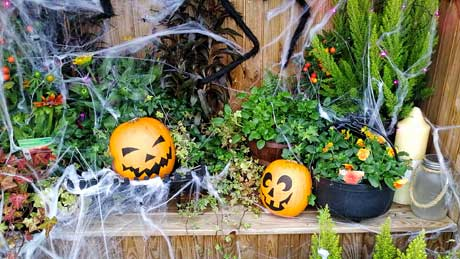 Hallowe'en display at Bridgemere Garden Centre - Cheshire
