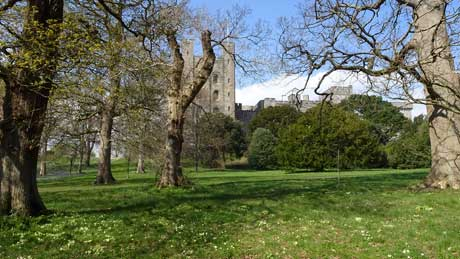 Penrhyn Castle and native primroses