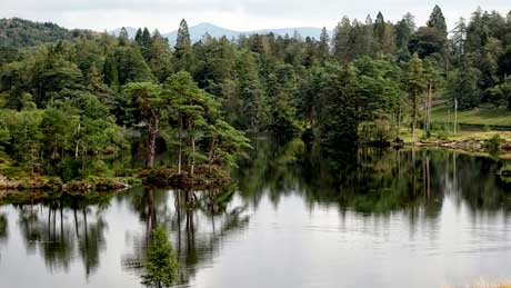 Tarn Hows, Lake District National Park, Cumbria